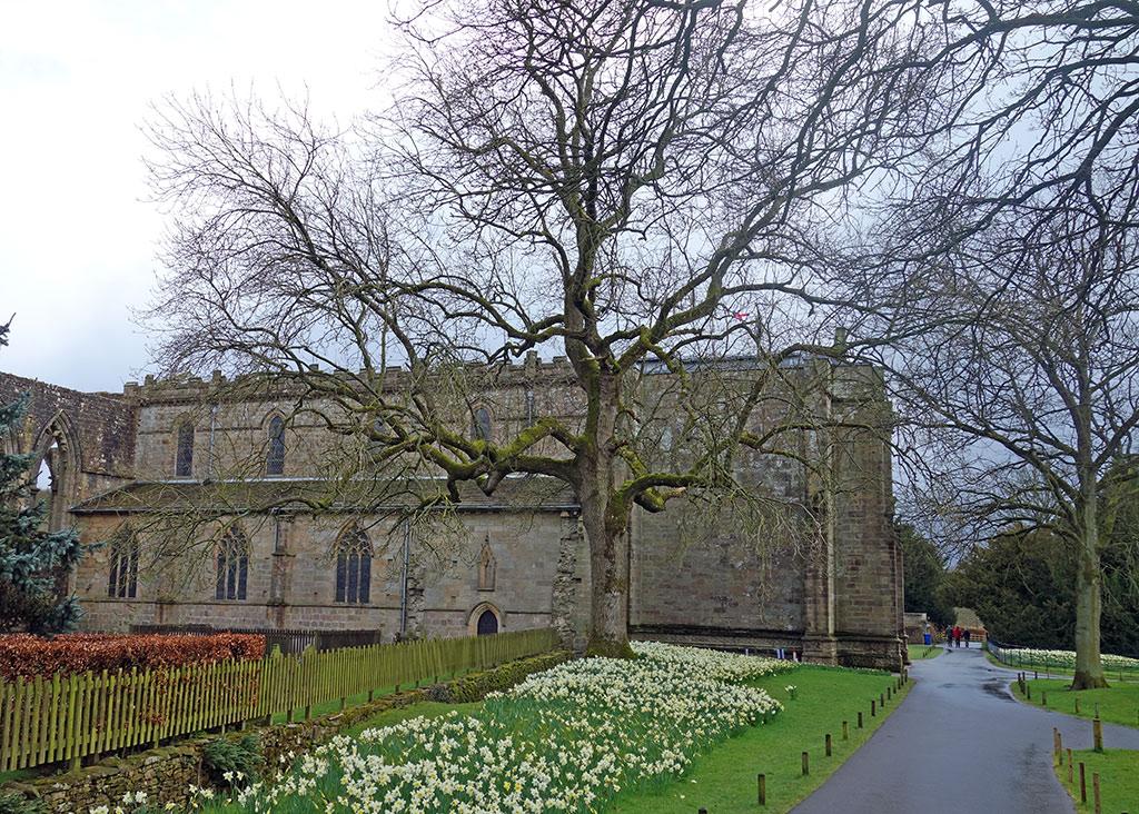 bolton-abbey-3-daffodils