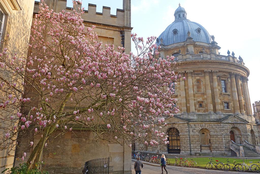magnolia-rad-cam2