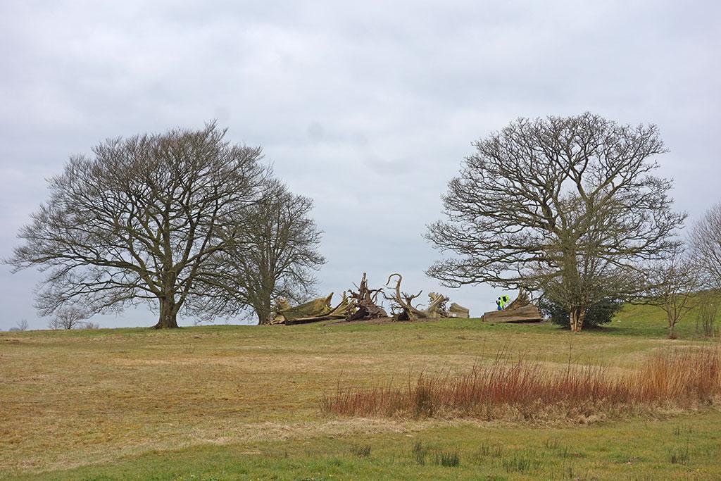 stumpery-trees
