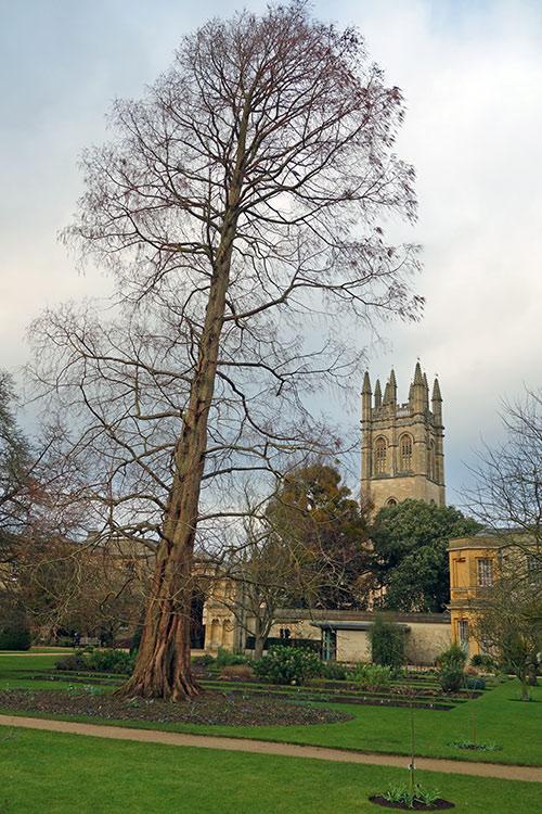 tall-tree-botanic-garden-500