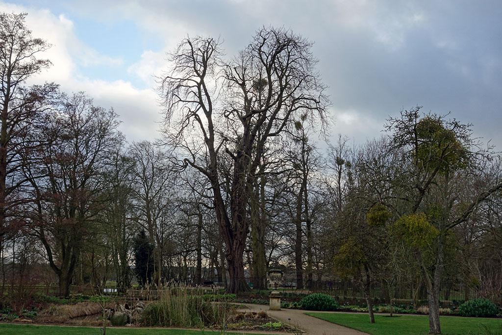 tall-trees-menacing-botanic