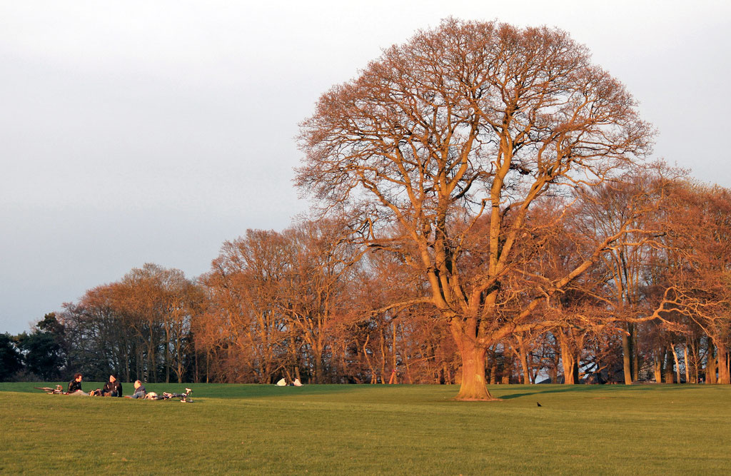 tree-sunset