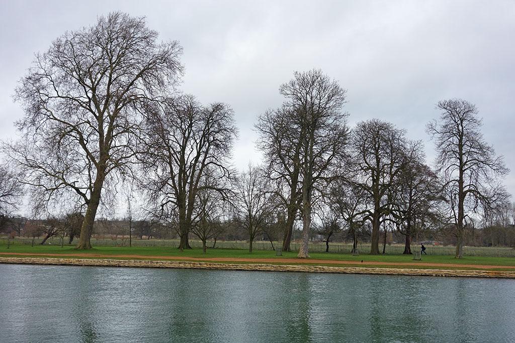 trees-christ-church-meadow