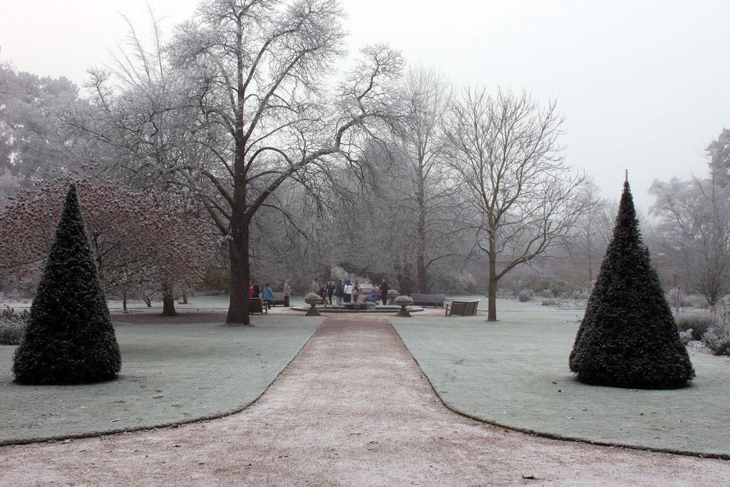 trees-cold-mist