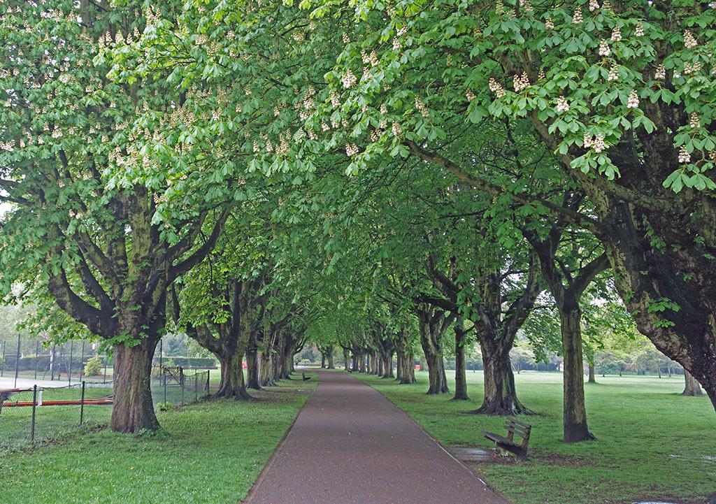 horse-chestnut-walk-florence-park2