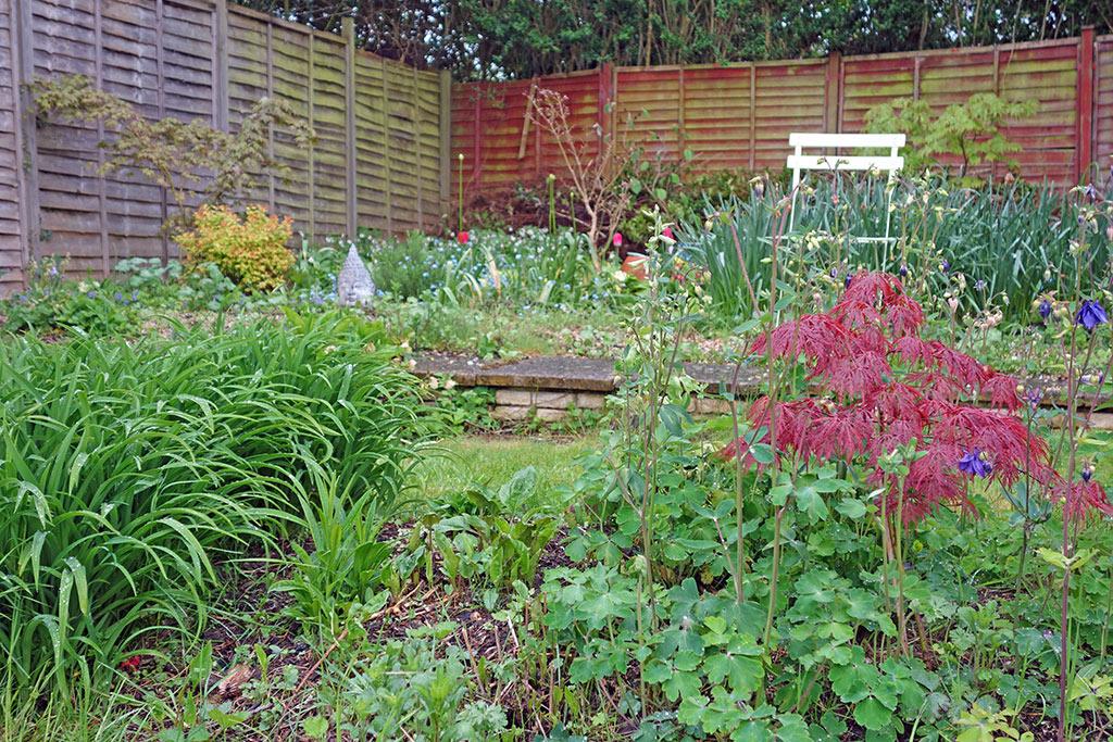 may-back-garden