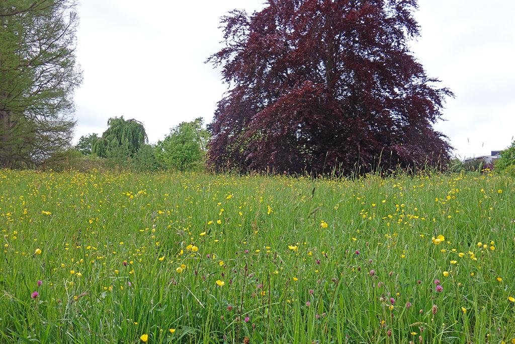 oxford-univ-parks-meadow-2