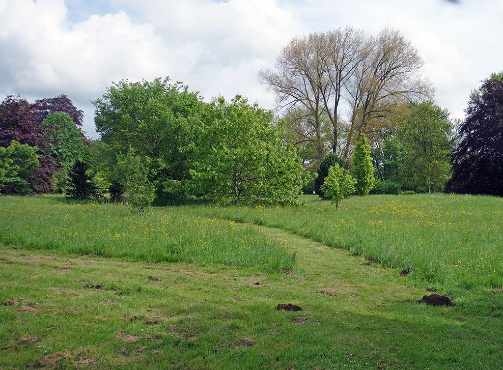oxford-univ-parks-meadow