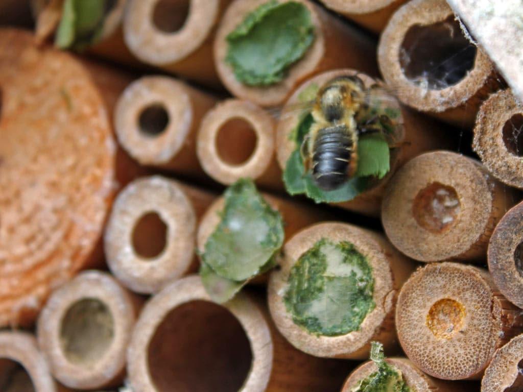 bee-leaves