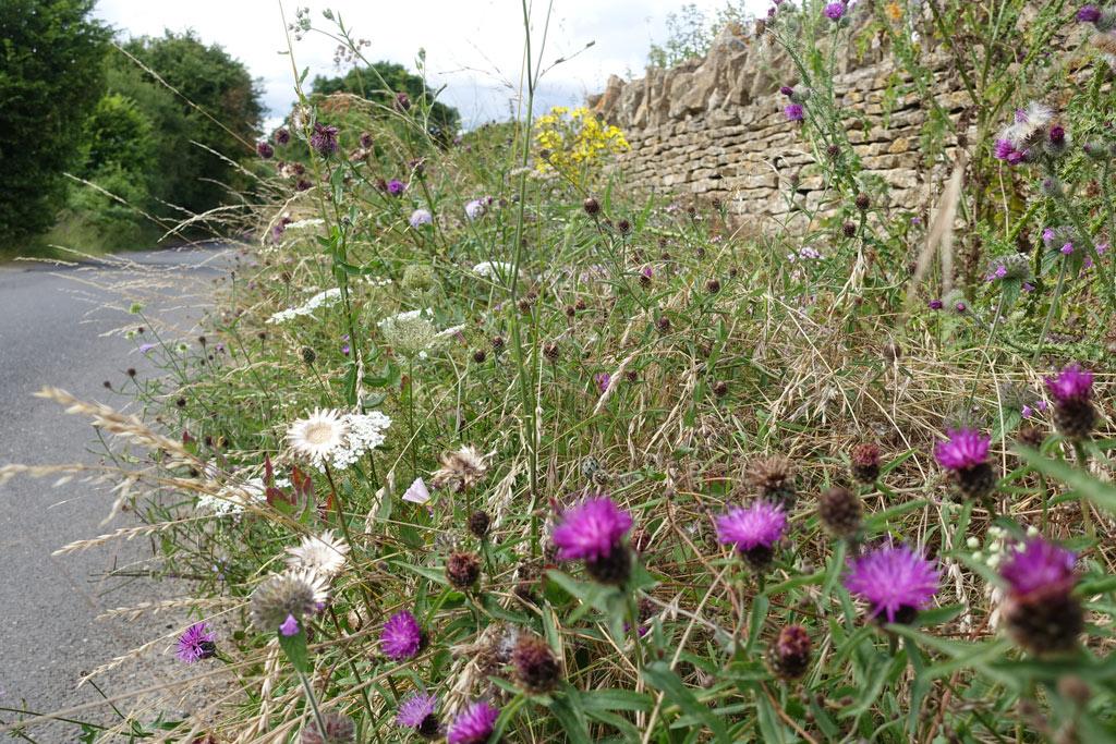 wild-flowers-road-2