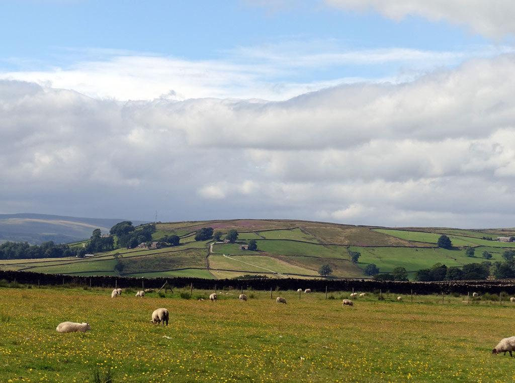 meadow-sheep-sky