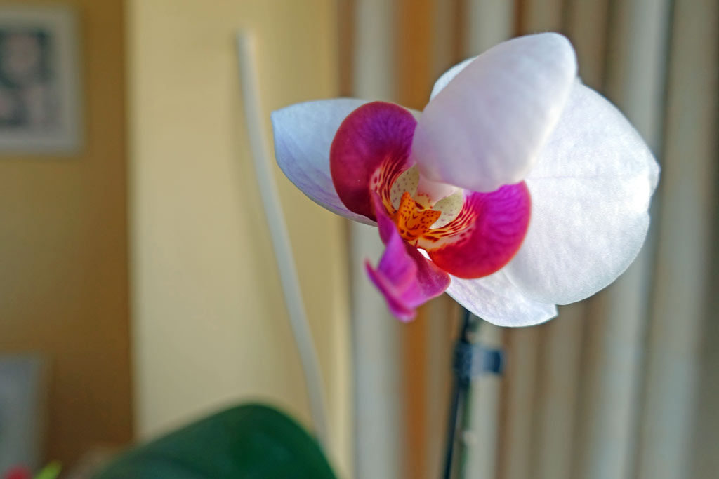 orchid-up-close