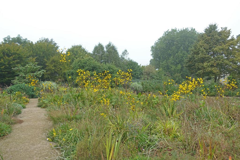 botanic-flowers-september-wild