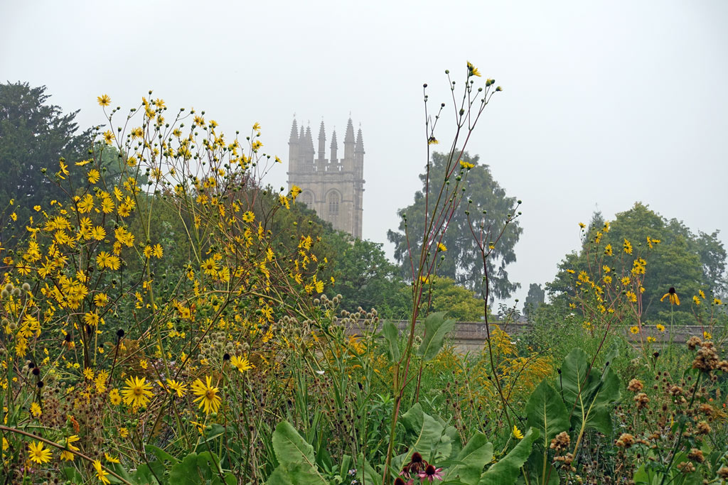 yellow-flowers-oxf-magdalen