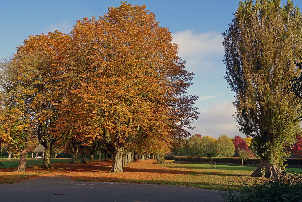 autumn-park