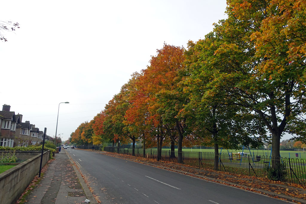 autumn-road-oxford