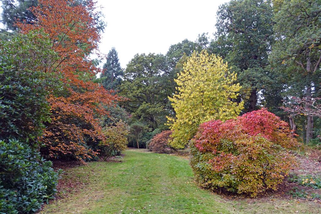 autumn-t