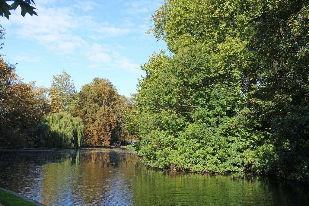 lake-trees-aut