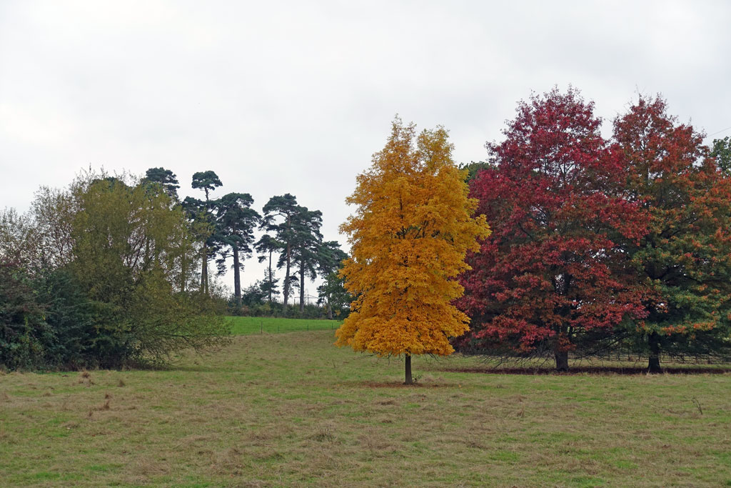 trees-aut