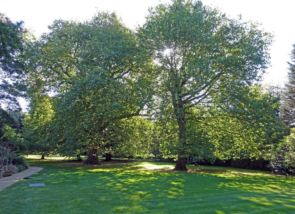 trees-sun