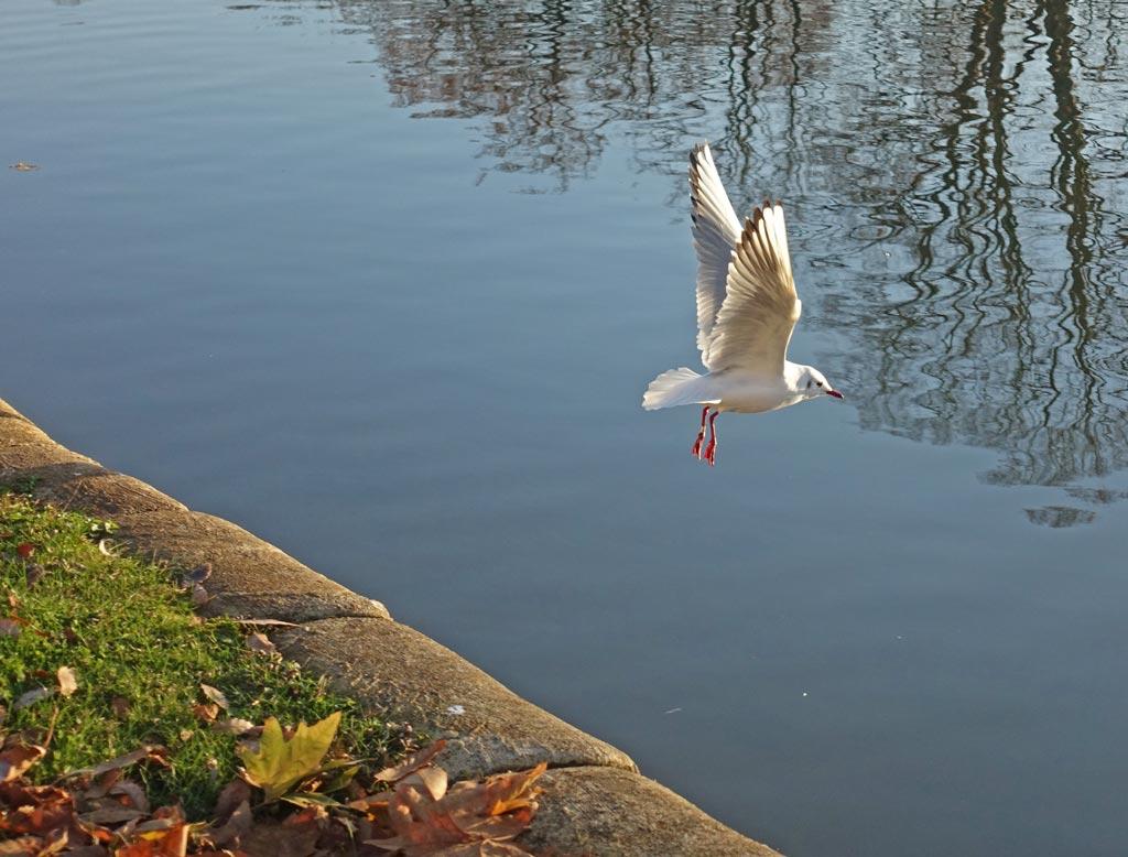 flying-bird-2