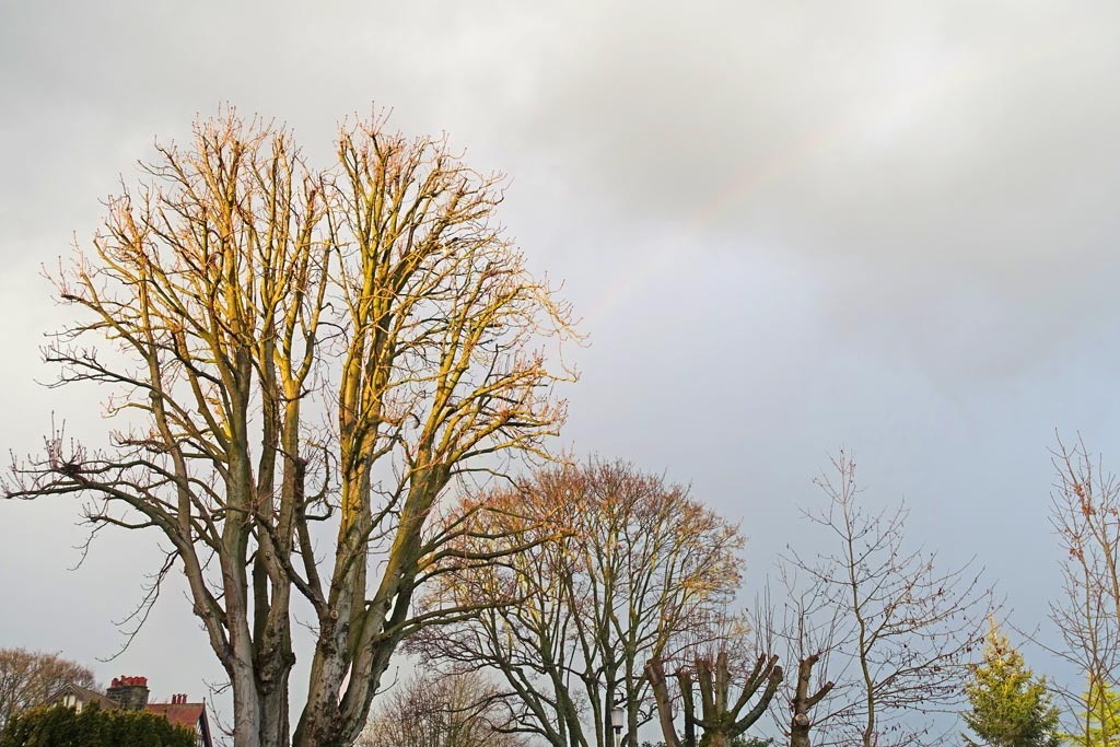 tree-feint-rainbow