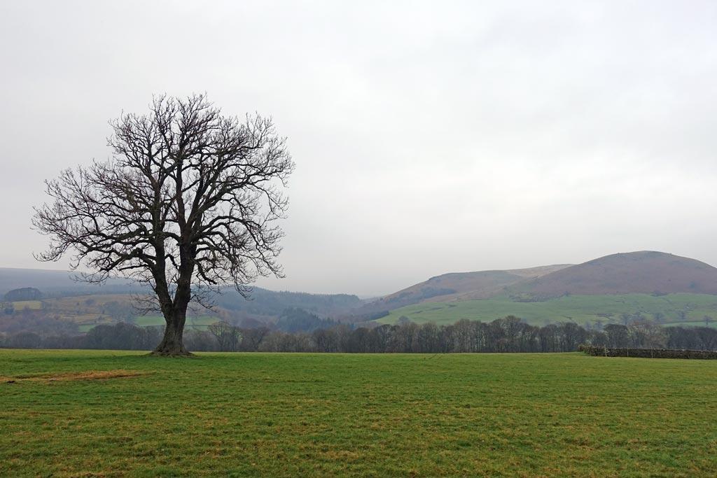 tree-on-left