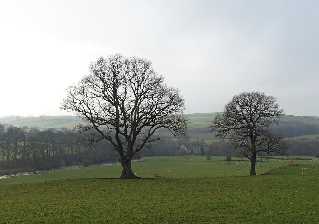 tree-shadow-pair