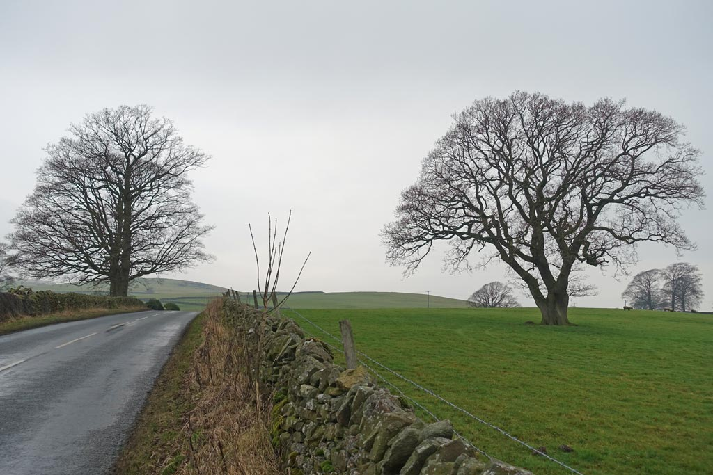 trees-road