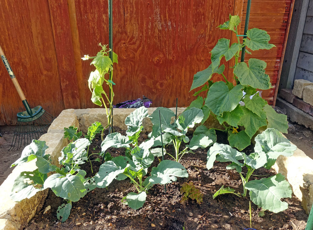 veg-planter